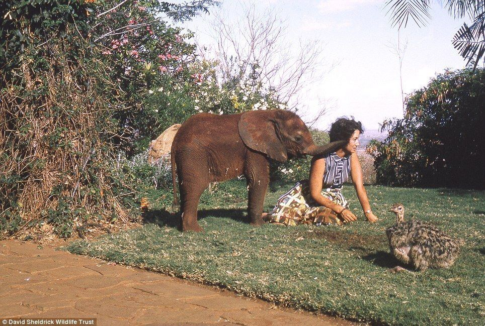 Elephant porn and girl remarkable