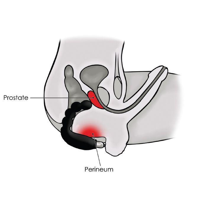 Neptune reccomend Cheeky boy prostate vibrator